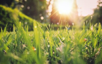 Outdoor Spring Service Opportunity